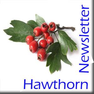 hawthornNewsletter