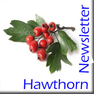 Hawthorn Home Schooling Newsletter – Issue 3